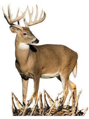Cornfield Whitetail - Cutout