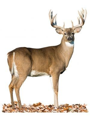 Broadside Whitetail - Cutout