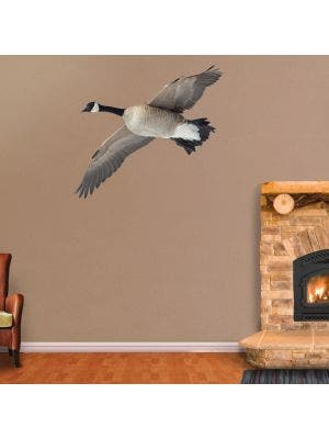 Canada Goose Flying Overhead - Cutout