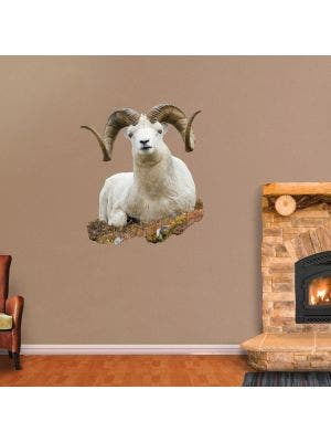Bedded Dall Sheep - Cutout