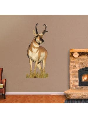 Antelope Looking Right - Cutout