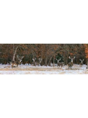 Snow Pack Of Monster Bucks Wall Graphic