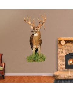 Monster Whitetail Buck with Drop Tyne - Cut Out