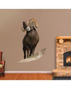 Big Horn Sheep - Cutout