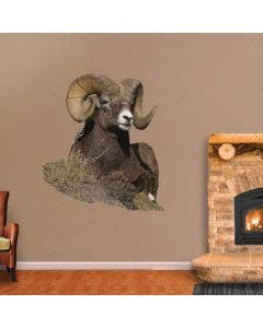 Bedded Big Horn Sheep with Mountain View - Cutout