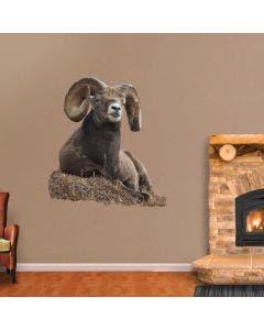 Bedded Big Horn Sheep - Cutout