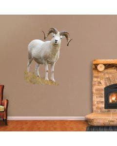 Standing Dall Sheep - Cutout
