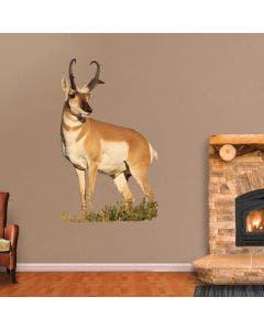 Sunlit Antelope - Cutout