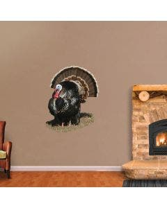 Merriam Turkey in Short Grass - Cutout