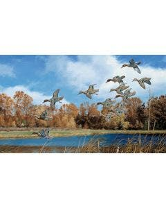 Swift Approach Green-winged Teal Wall Graphic