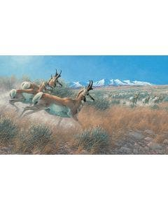 Flat Out Antelope Wall Graphic
