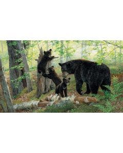 Playtime Wall Graphic - Black Bears
