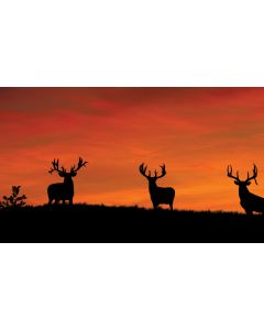 Whitetail Silhouettes At Sunrise Wall Graphic